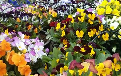 Flores para el empleo